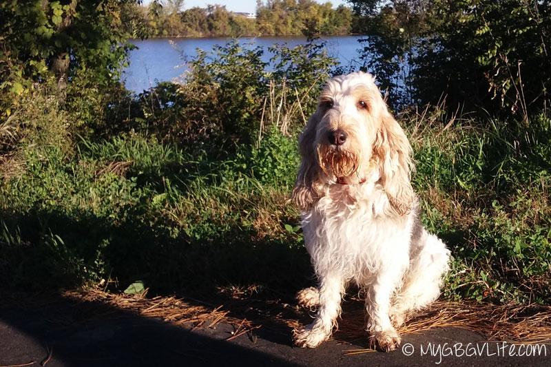 My GBGV Life on the lake shore