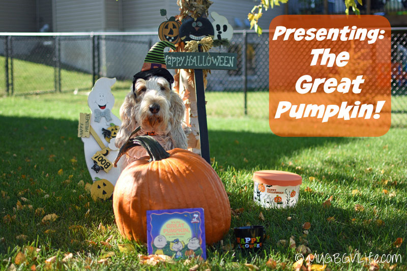 My GBGV Life with the Great Pumpkin