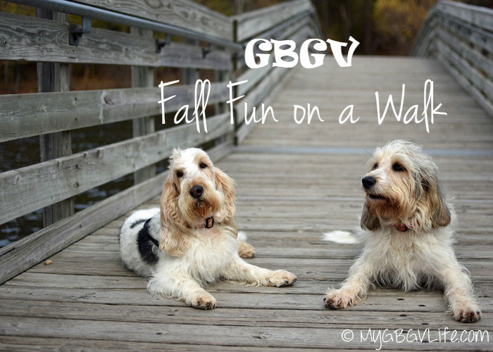 My GBGV Life fall fun on a walk