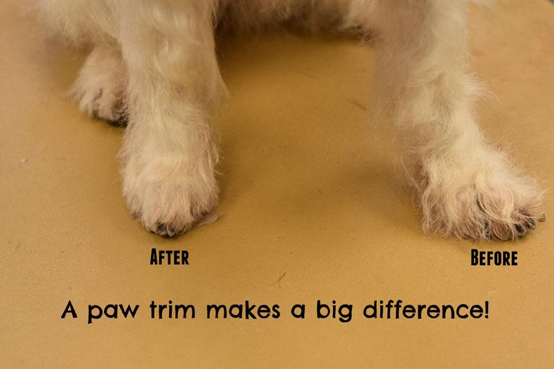My GBGV Life paw fur trim