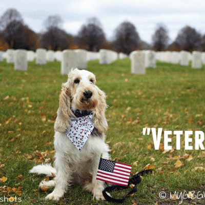 Veteran on Veteran's Day 2015