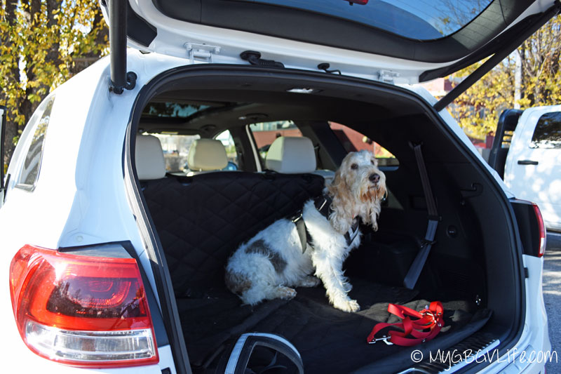 My GBGV Life riding in the back of the Kia Sorento