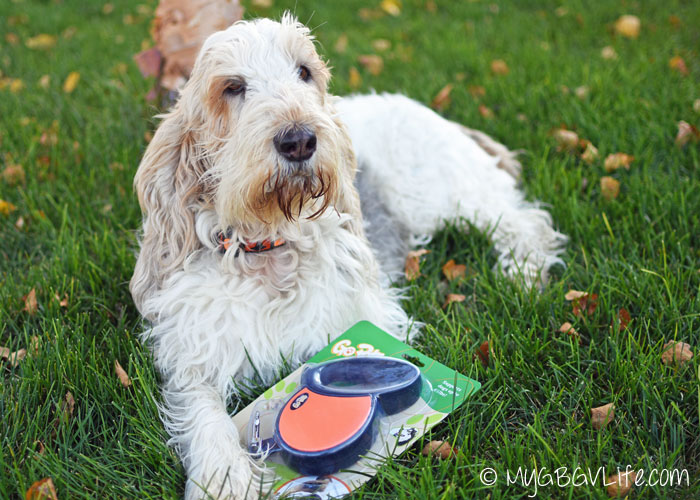 My GBGV Life with GoPets retractable leash