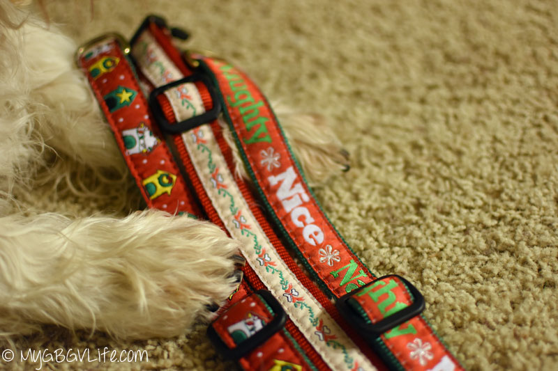 My GBGV Life Up Country collars, harnesses, and leashes are so stylish