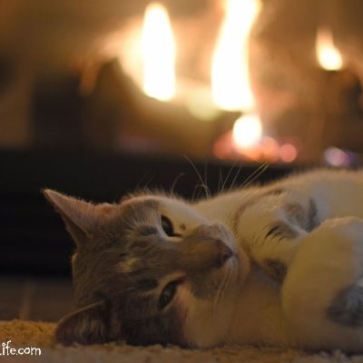 Total Winter Relaxation