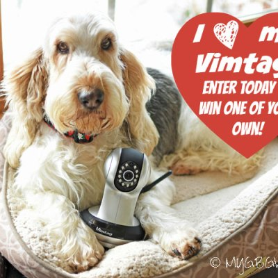 Home Alone – Catch Your Pet In Action {Giveaway}