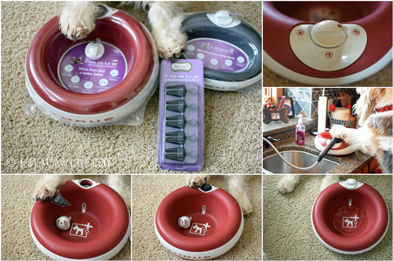 My GBGV Life setting up the Torus bowl for fresh water for dogs and cats