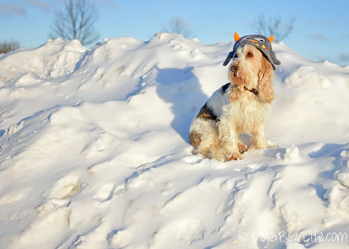 My GBGV Life the monster of snow mountain