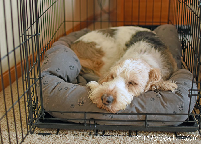 how to crate train my older dog