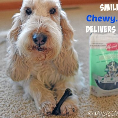 Dental Chews For Dental Health #ChewyInfluencer