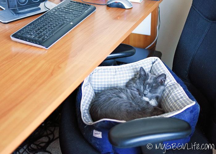 My GBGV Life sleep tips from cat bro bert