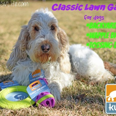 Fun Classic Lawn Games For Dogs