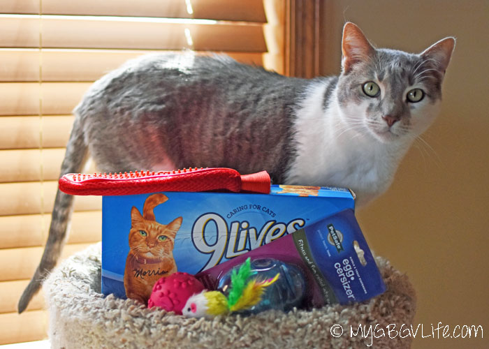 My GBGV Life Cat Grooming Tips From Cat Bro Bert And Morris The Cat