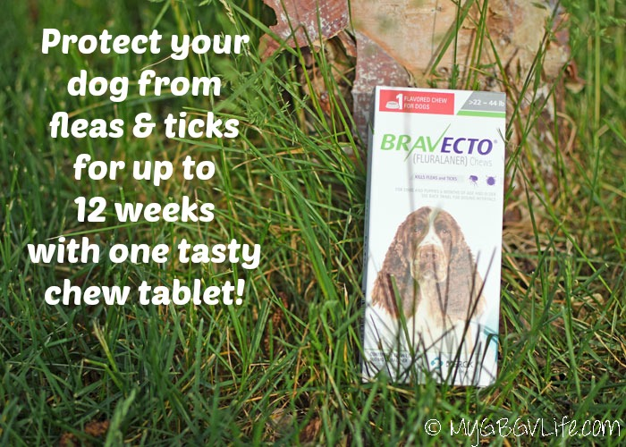 My GBGV Life One Chew Equals Extraordinary Flea And Tick protection For 12 Weeks! #12BRAVECTO