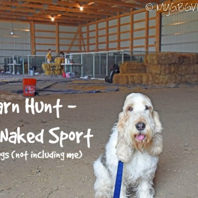 Barn Hunt – The Naked Sport