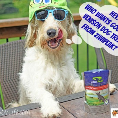Caught With ZiwiPeak Good-Dog Treats – An Undercover #ChewyInfluencer