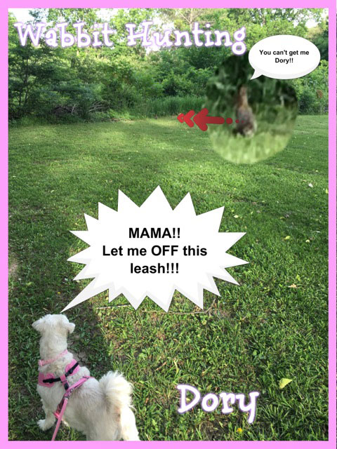 My GBGV Life Going For Gold In Wabbit Tracking - The 2016 Pawlympics