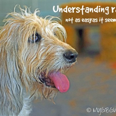 Understanding Rats – A Lesson From Bailie