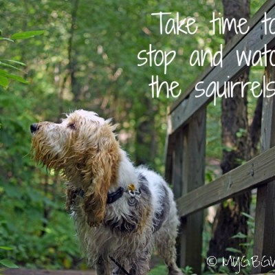 Stop And Watch The Squirrels