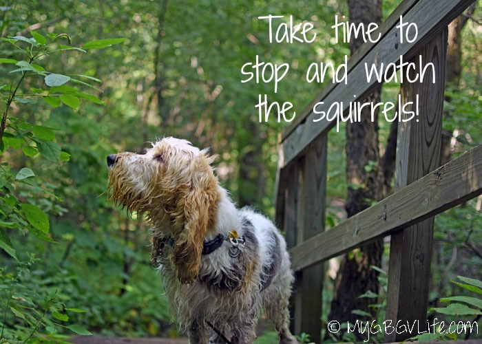 My GBGV Life Stop And Watch The Squirrels