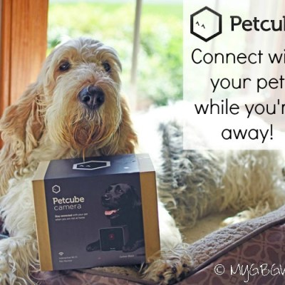 Petcube – Connect With Your Pets While You Are Away