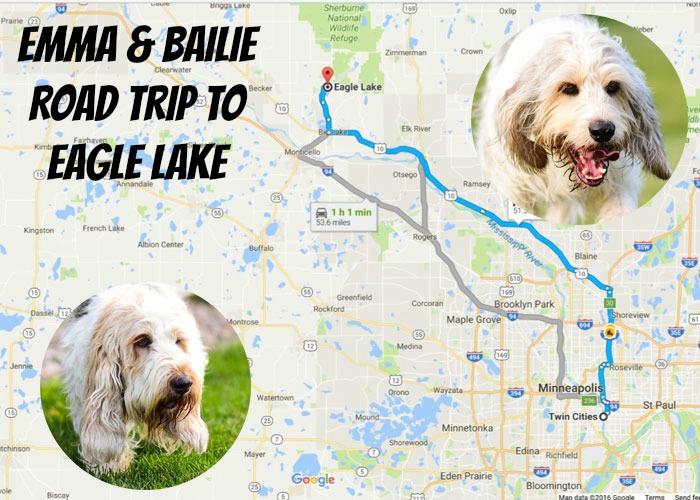 7 Dog Safety Tips At The Lake