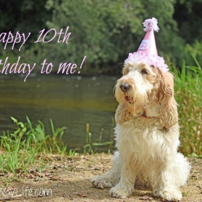 A Perfect Ten – Happy Birthday To Me!