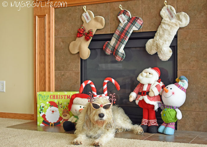 My GBGV Life Our Favorite Christmas Stockings For Dogs Ever!