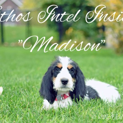 Introducing Our New Little Sister, Ethos Intel Inside, aka Madison