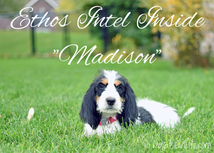 My GBGV Life Introducing Our New Little Sister Ethos Intel Inside, aka Madison