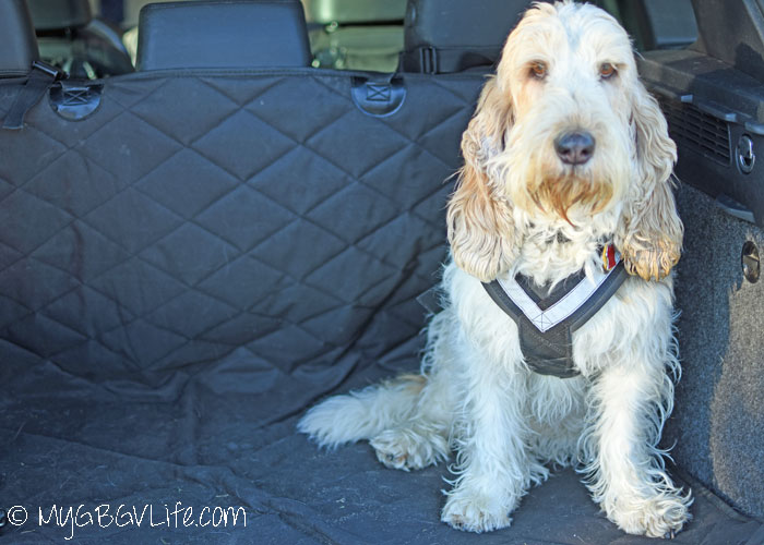 My GBGV Life Seat Belts For Dogs - Is Your Dog A Safe Rider?