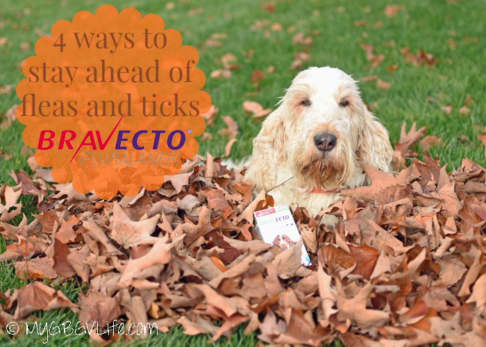 My GBGV LIfe 4 Ways To Stay Ahead Of Fleas And Ticks #12BRAVECTO