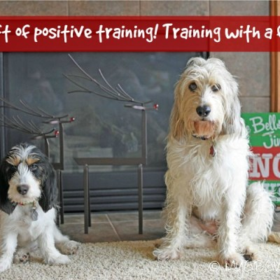 The Gift Of Positive Training! Training With A Friend!
