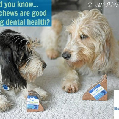 Why You Should Try Root Chews For Dog Dental Health