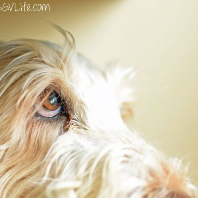Window To The Soul – Pet Photography Challenge Week 6