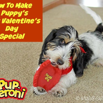 How To Make A Puppy's First Valentine's Day Special!
