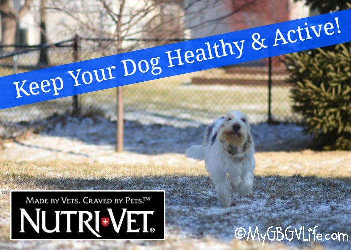 My GBGV Life Keep Your Dog Healthy And Active With Nutri-Vet