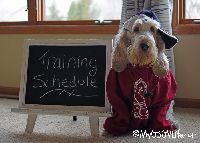 My GBGV Life How To Fit Training Your Dog Into A Busy Schedule