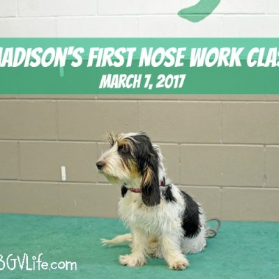 Madison's First Nose Work Class