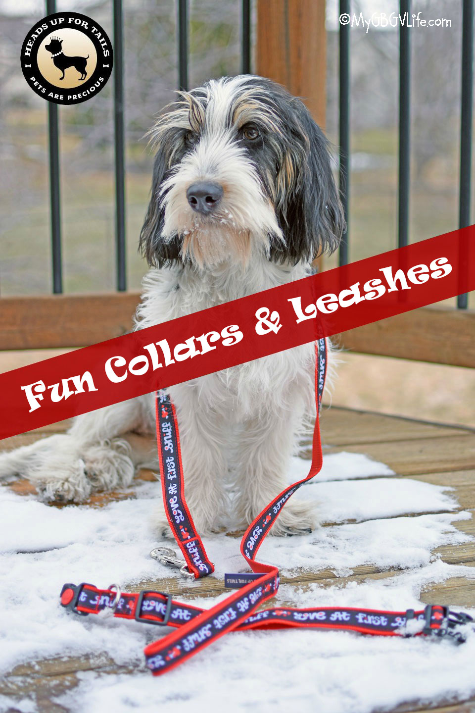 My GBGV Life Fun Collars And Leashes For Your Dog