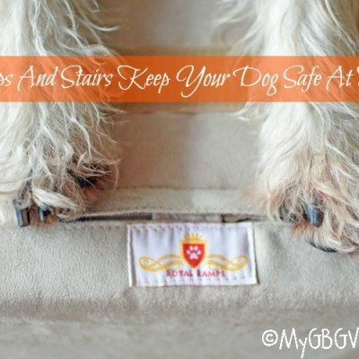 Ramps And Stairs Keep Your Dog Safe At Home