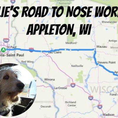 The Road To Nose Work In Appleton, WI