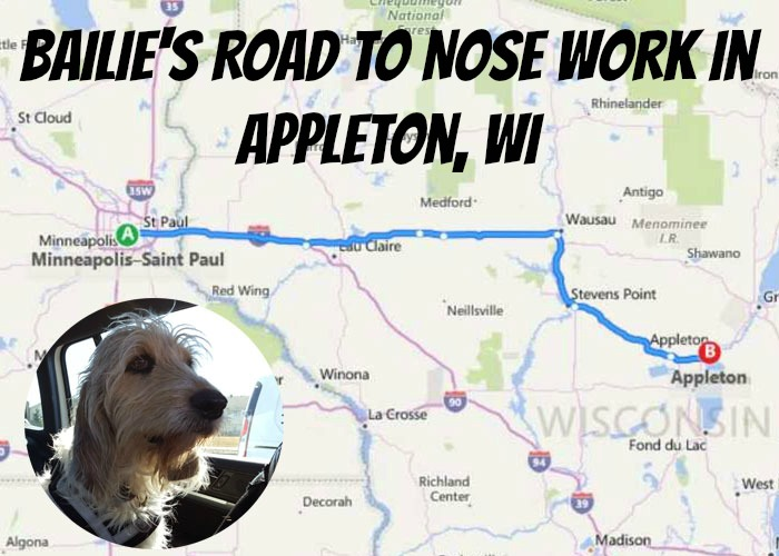 My GBGV Life The Road To Nose Work In Appleton, WI