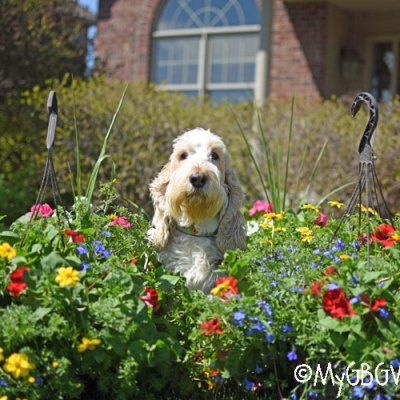 Flower Friday – Mother's Day Weekend