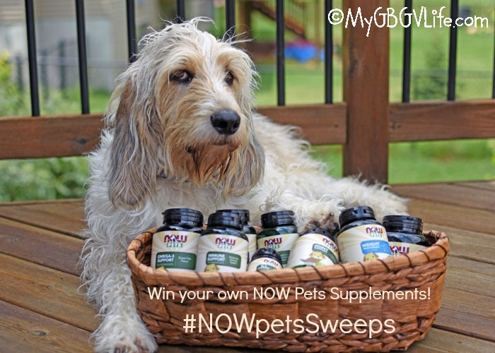 My GBGV Life What Are Pet Supplements From NOW® - Review And Sweepstakes!