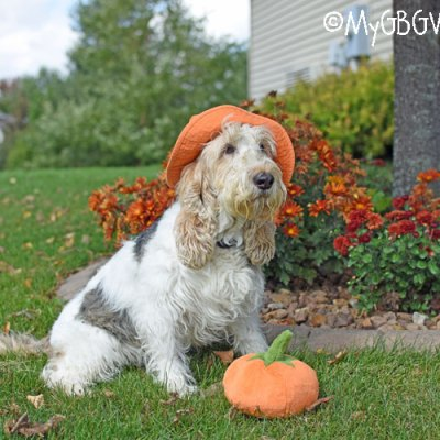 It's Looking A Lot Like Pumpkin Season
