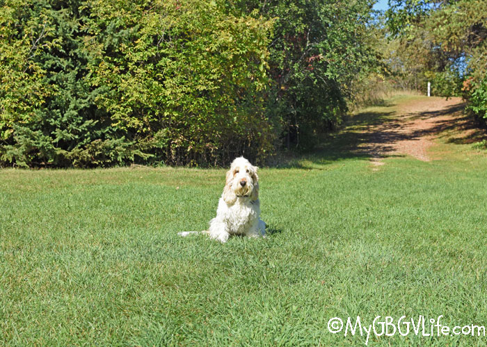 My GBGV Life Checking Out Ritter Farm Park For National Walk Your Dog Week