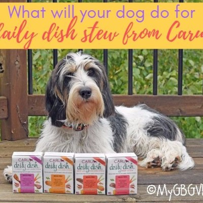 What Will Your Dog Do For Daily Dish Stew From Caru?