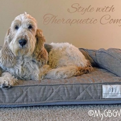 The Brentwood Home Dog Bed – Stylish, Therapeutic Comfort