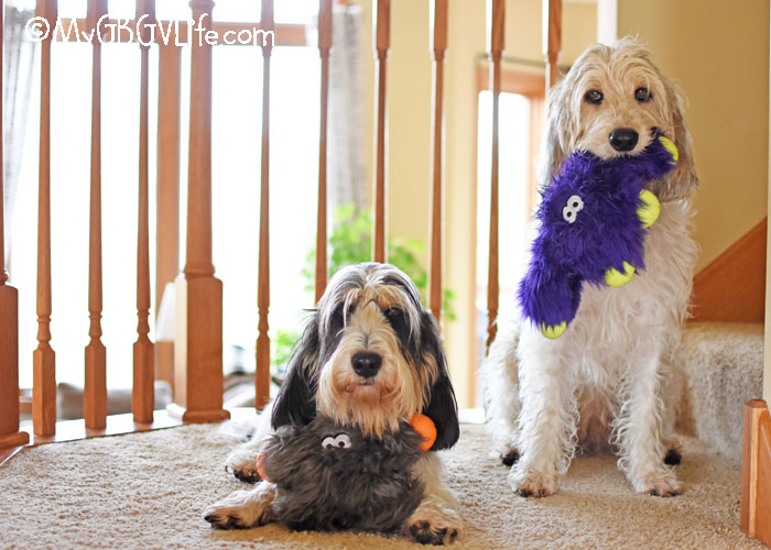 My GBGV Life The Rowdies Have Arrived! Meet Our Fun New Friends Jefferson And Lincoln!